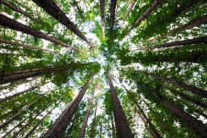 méditation forêt